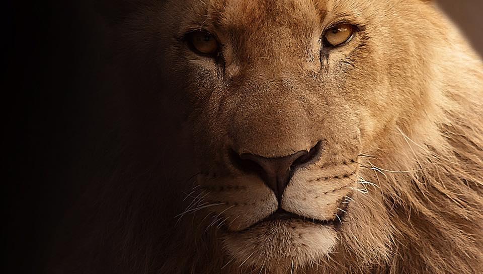 Lejonportal och solförmörkelse